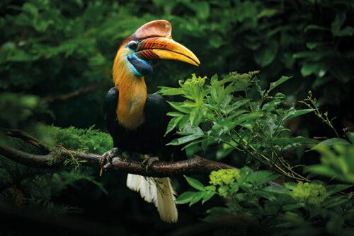 Kronjuwelen der Artenvielfalt: Regenwälder in Asien, Afrika und Südamerika