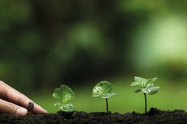 Nachhaltigkeit Definition